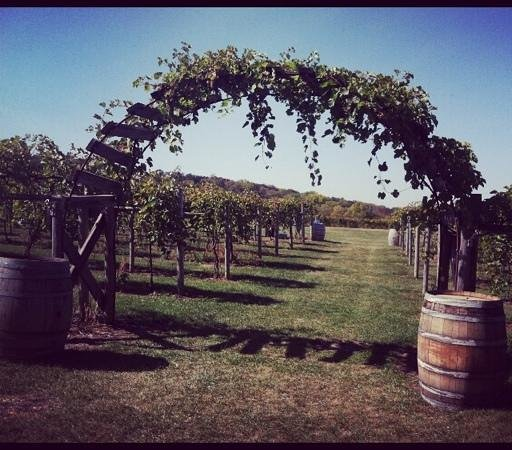 Galena Cellars Winery & Vineyard:                   the beautiful arch