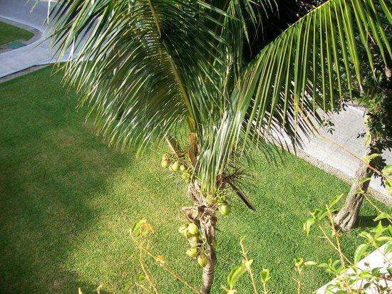 Grand Bahia Principe Coba:                   View from the balcony