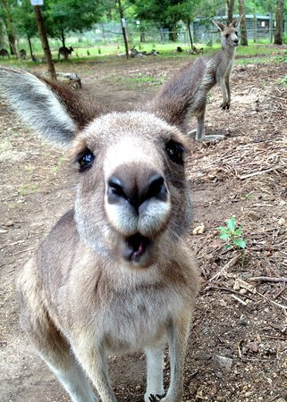 Potoroo Palace:                   Kangaroo!