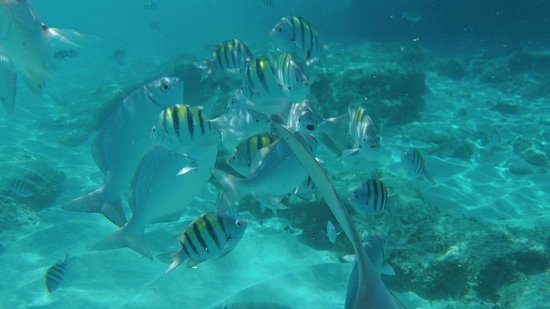 Playa Azul Golf, Scuba, Spa:                   The fish off the beach about 300m south of the resort