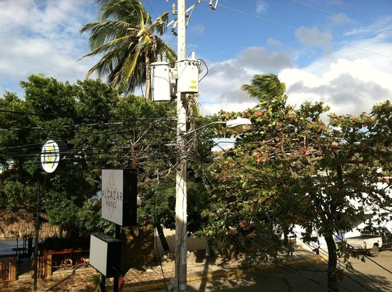 Hotel Alcazar:                   Alcazar sign, tree where swarm of birds hang out, and comical wiring scheme on