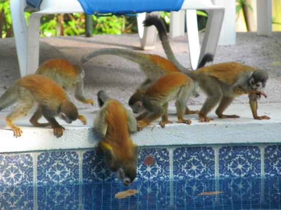 Byblos Resort & Casino:                                     Monkey Business