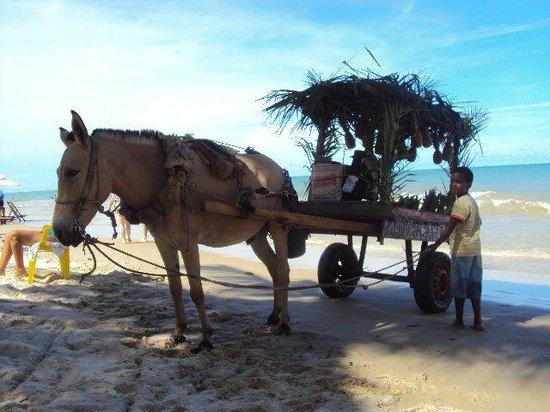 Pousada Tamarindo : Vida em Trancoso