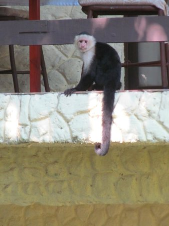 Byblos Resort & Casino:                                     Monkey above pool at Byblo's