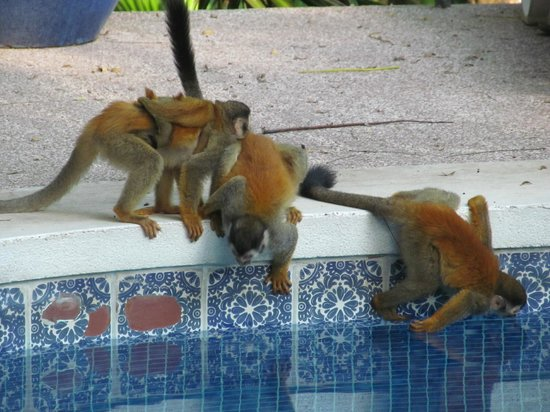 بيبلوس ريزورت آند كازينو:                                     Monekys needing a drink                                  
