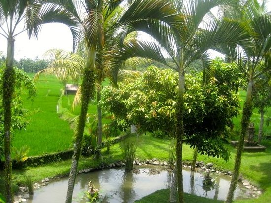 Tegal Sari:                   Wonderfully Kept Grounds with Rice Fields Nearby