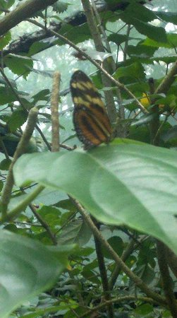 Butterfly Gardens:                   Up close