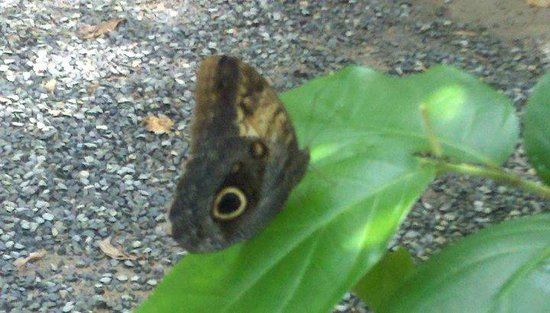Butterfly Gardens:                   Upclose