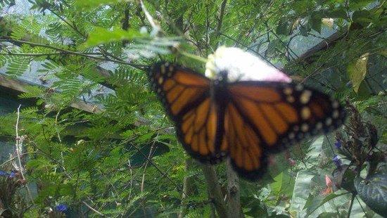 Butterfly Gardens:                   Butterfly!