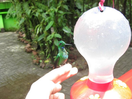 Allegro Papagayo:                   Hummingbird tour (included in the 2day Arenal Tour)