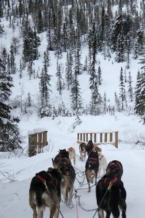 Chena Hot Springs Resort:                   dog sled ride