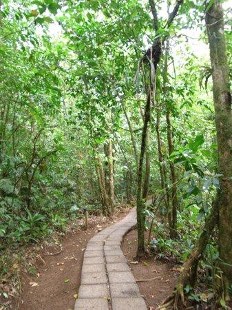 Termales del Bosque :                   温泉への道