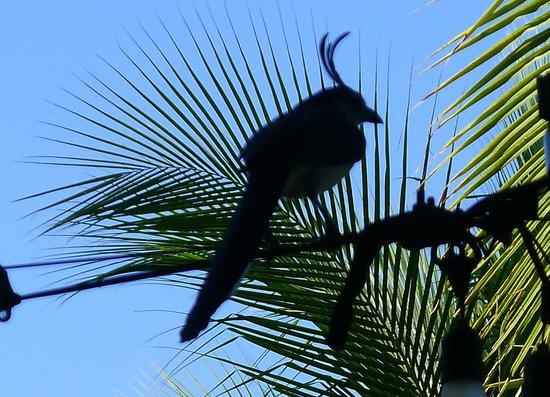 Four Seasons Resort Costa Rica at Peninsula Papagayo : Vogelwelt