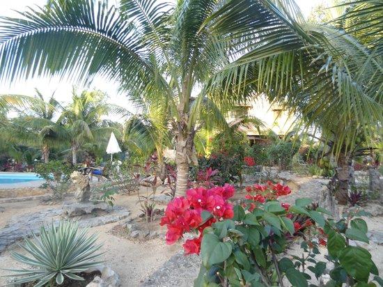 Villa Tortugas Residence:                   il giardino