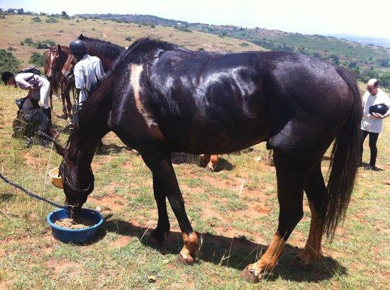 Nile Horseback Safaris - Day Tours :                   More Zeus - I wanted to take him home