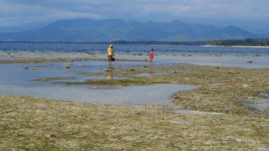 Coconut Cottages:                   bassa marea a Gili Air