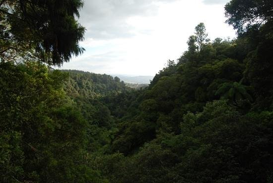 Adventure Puketi:                   Puketi Forest - A view over the forest during the combo walk