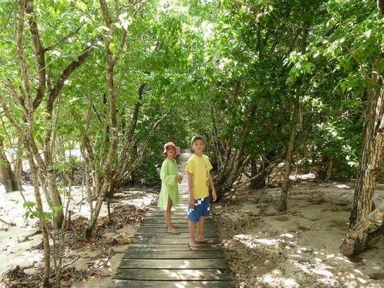 Indigo Seychelles Boat Charter and Excursions Day Tours:                   les mangroves de CURIEUSE