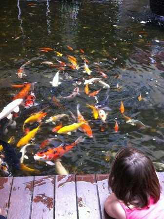 Koi pond picture of feung nakorn balcony rooms cafe for Balcony koi pond