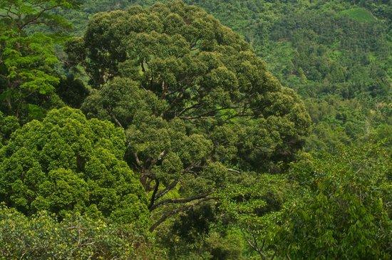 Kota Kinabalu District, Malaysia:                   Jungle