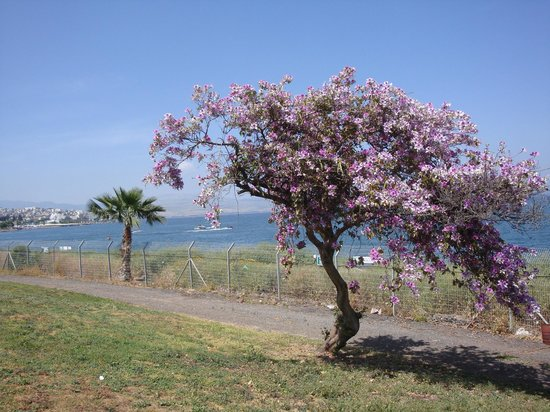 Garden of spa Hamat Tiberias