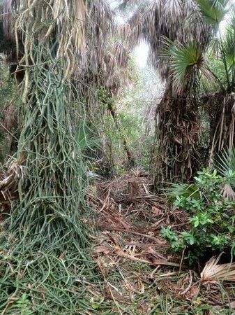 Cabbage Key Inn:                                     the trail