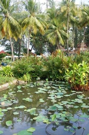 Dusit Thani Laguna Phuket:                   vegetación y agua: una combinación inevitable