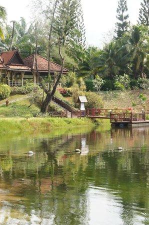 Dusit Thani Laguna Phuket:                   sector de la laguna