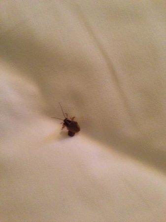 Hotel Las Americas:                   cucarachas en camas