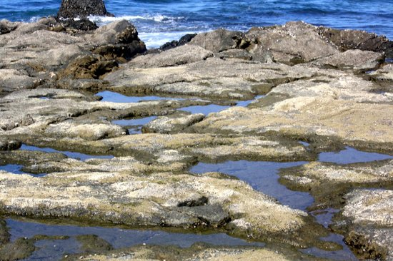 Occidental Tamarindo:                   Tide Pools at Low Tide