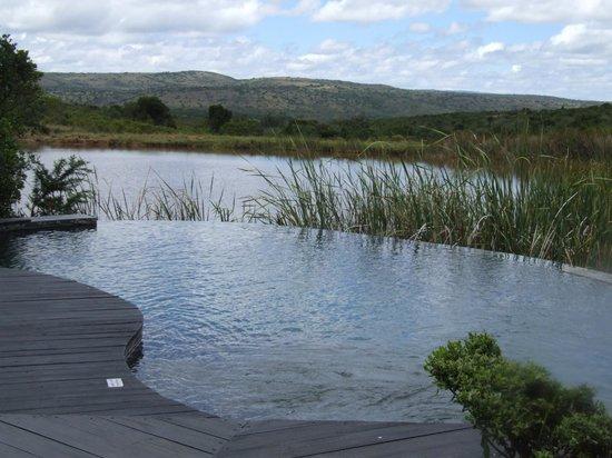 Kichaka Luxury Game Lodge:                   Pool & Waterhole