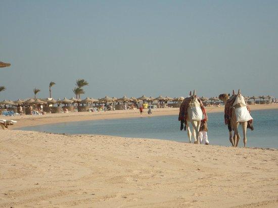 Kempinski Hotel Soma Bay:                   Beach