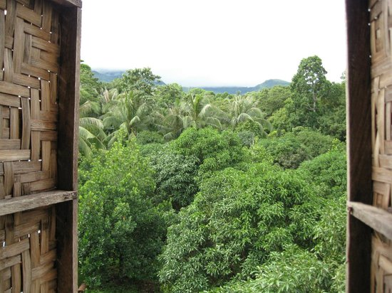 Enigmata Treehouse Ecolodge:                                     Ohayou Gozaimasu! What a wonderful way to start your day...