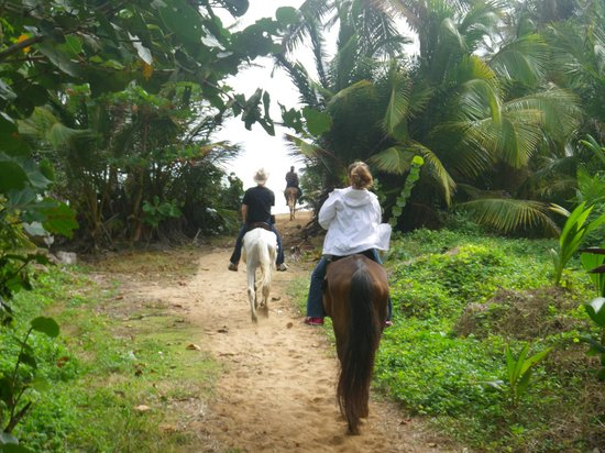 Catch a Dream Ranch :                   Exiting the rainforest at the beach