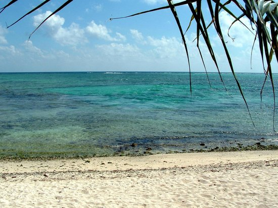 Casa Cenote:                   Beach view close up of where the fresh water meets the sea only a short distan