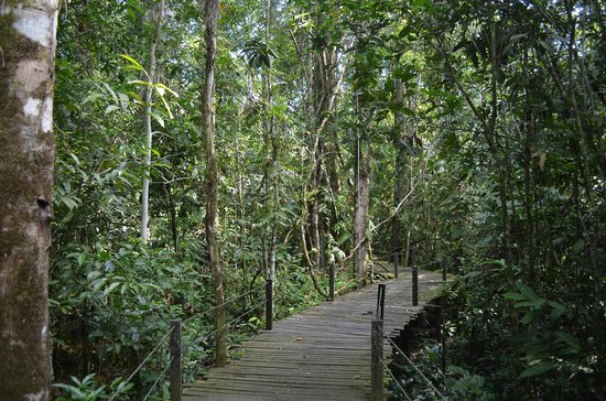 Abai Jungle Lodge:                   Jungle near Boardwalk at Abai