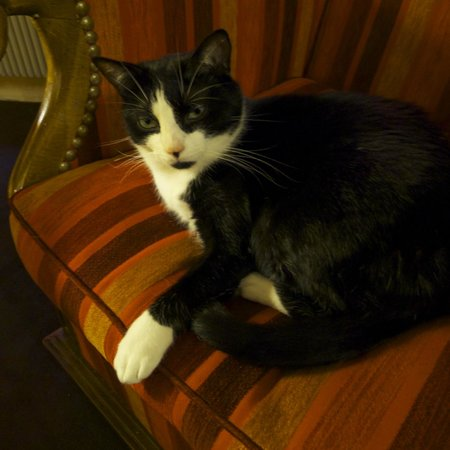 Hotel Saint Paul Rive Gauche:                                     Le Chat