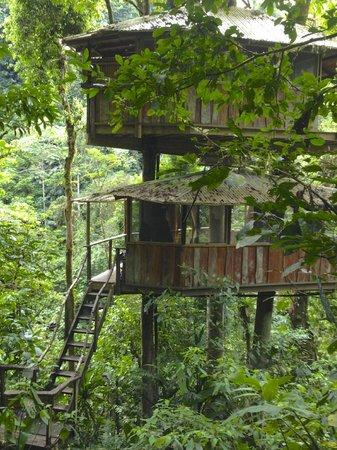 Finca Bellavista:                                     Mis Ojos treehouse.
