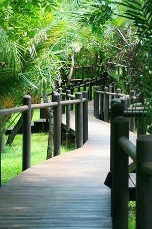 Anantara Bazaruto Island Resort:                   дорожки в саду