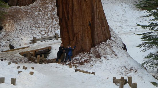 Montecito Sequoia Lodge:                   Near General Sherman tree