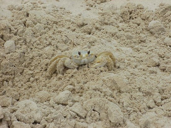 Surfside Beach, TX:                   It's a bit chilly but there is the occasional crab