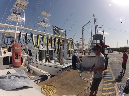 Play Baby Charters: Some more mahi and a fat jack!