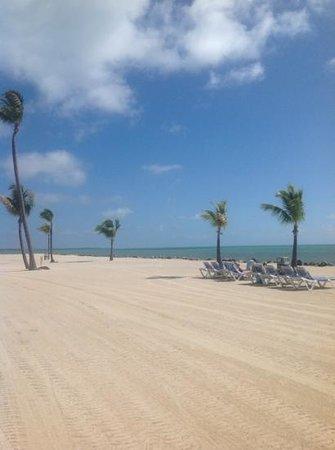 Islander Resort, a Guy Harvey Outpost:                   islander beach
