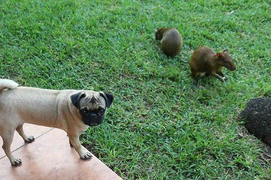 فيلاز بيكالو بي آند بي بوتيك: zahme und wilde Haustiere