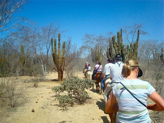 Grand Solmar Land's End Resort & Spa:                   Trail Ride In the Desert