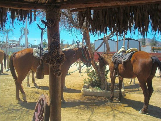 Grand Solmar Land's End Resort & Spa:                   Trail Ponies