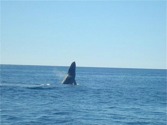 Grand Solmar Land's End Resort & Spa:                   Whale Watching!