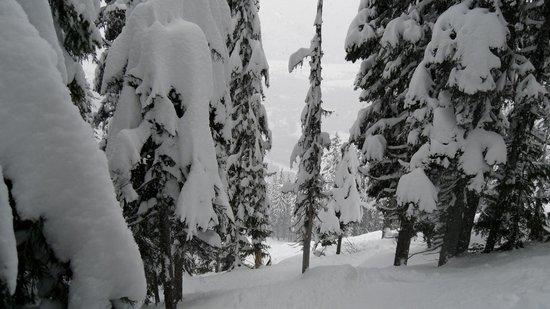 Snow Creek Lodge by Fernie Lodging Co:                   Condition de ski (poudreuse)
