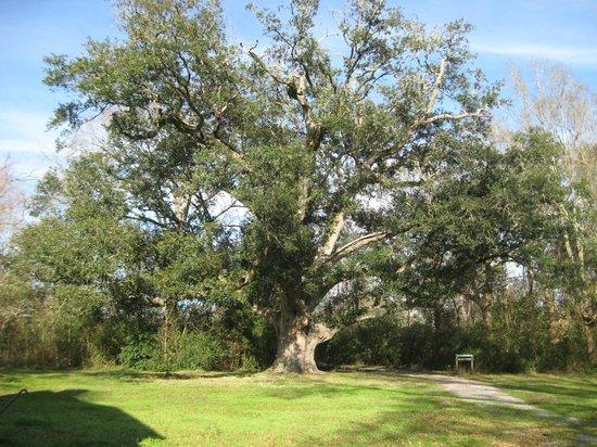 Evangeline State Park :                   Gabriel Oak
