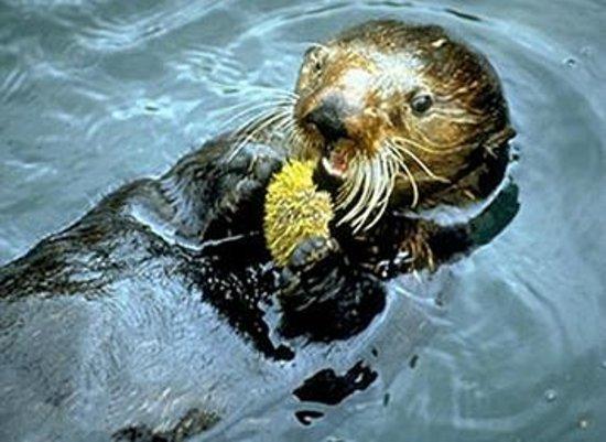 Jimmie Jack's Alaska Fishing Lodge: Wildlife Cruise
